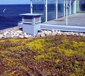 Ekstenzivna zazelenitev s Xeroflor zelenimi strehami