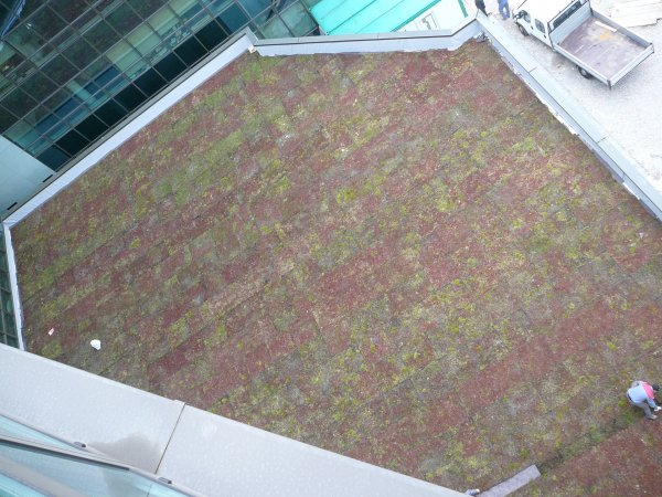 Zalivanje in gnojenje ravne strehe
