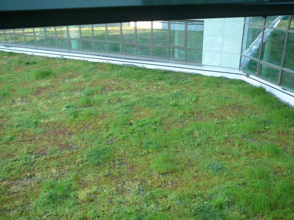 Končni izgled ravne strehe